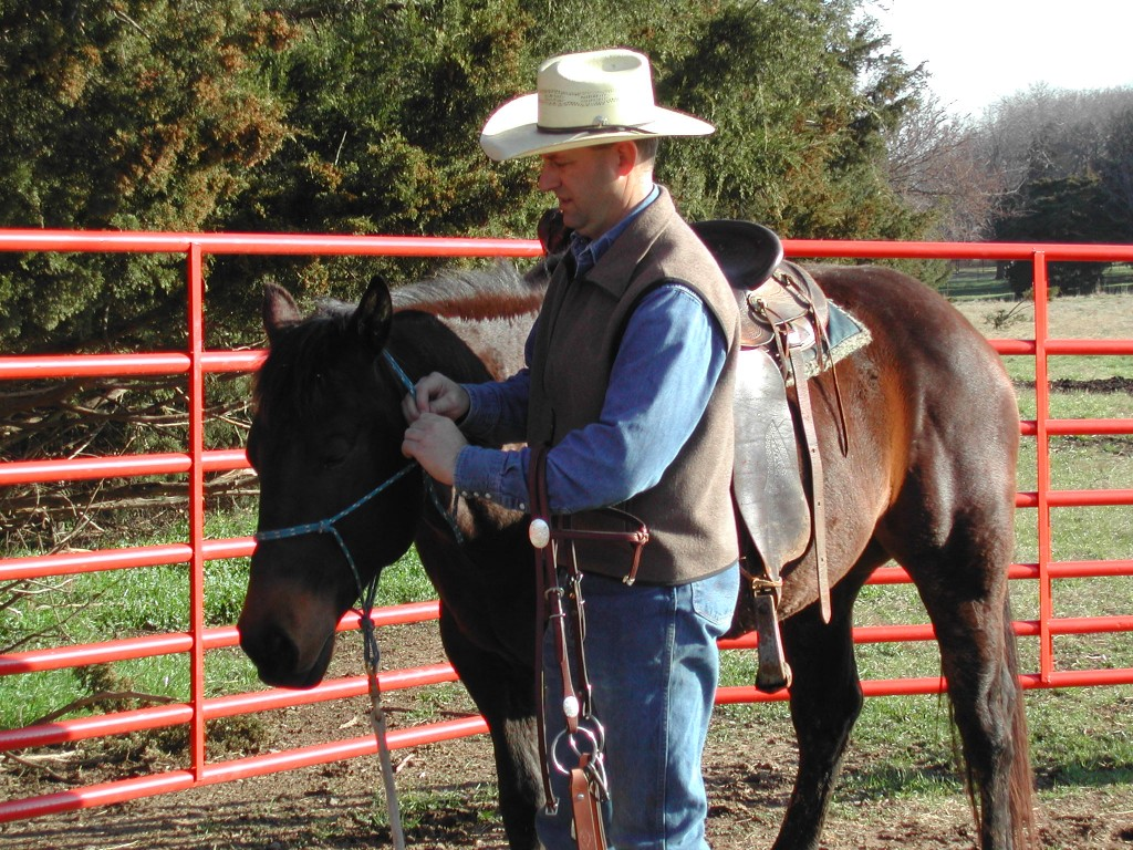 Changing from halter to bridle